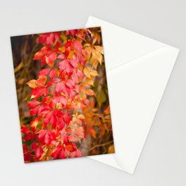 Vitaceae family red plant Parthenocissus quinquefolia vine Stationery Cards