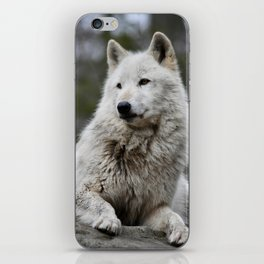Alawa Rests on a Rock iPhone Skin