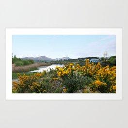 Gorse Blossoms; Sneem, County Kerry Art Print