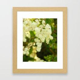 California Coast Floral VI Framed Art Print