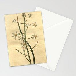 Flower 2510 ornithogalum narbonense Narbonne Star of Bethlehem10 Stationery Cards