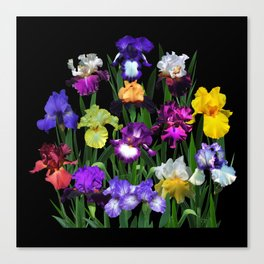 Iris Garden - on black Canvas Print