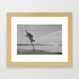 Swept Sapling Framed Art Print