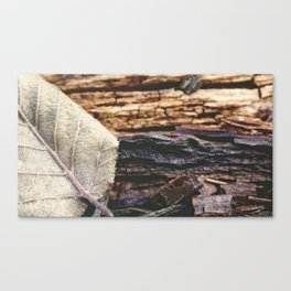 weathering collection #1 Canvas Print