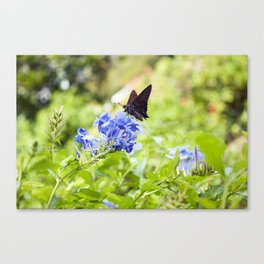Butterfly on a Purple Flower Photography Print Canvas Print