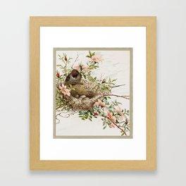 Vintage Bird with Eggs in Nest Framed Art Print