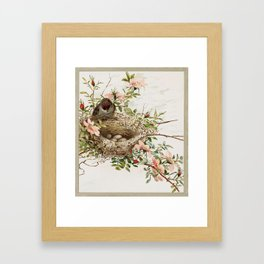 Vintage Bird with Eggs in Nest Framed Art Print