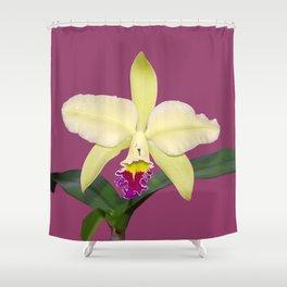 Stunning cream and magenta orchid flower Shower Curtain