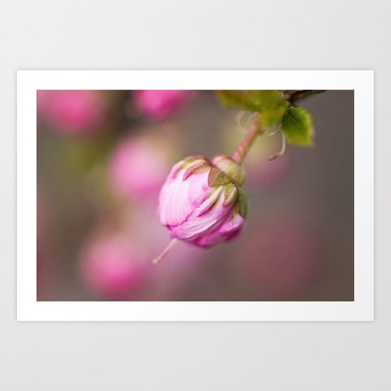 Fleur Rose Art Print