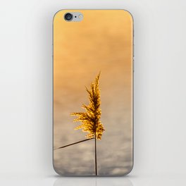 Reed tip in Camargue iPhone Skin