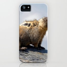 Watercolor Marmot 28, Forest Canyon Tundra, RMNP, Colorado, Windy Rumples iPhone Case