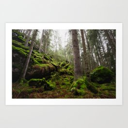 Forest Dream III Art Print