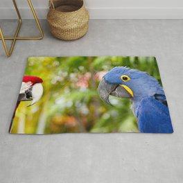 Blue Hyacinth Macaw - Anodorhynchus hyacinthinus Rug