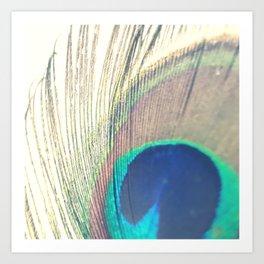 Peacock colors Art Print