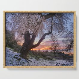 Centennial almond tree. Flowering time. At sunset. Serving Tray