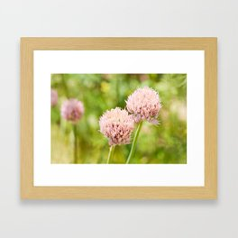 Pink chives flowering plant Framed Art Print