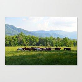 Smokey Mountain Horses Canvas Print