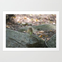 Chipmunk Eatin' Grape Art Print
