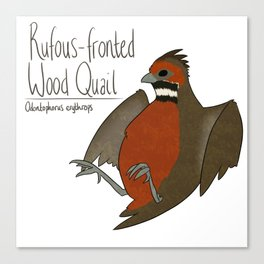 Rufous-fronted Wood Quail Canvas Print