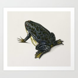 Clawed frog (Dactylethra capensis) illustrated by Charles Dessalines D' Orbigny (1806-1876) Art Print