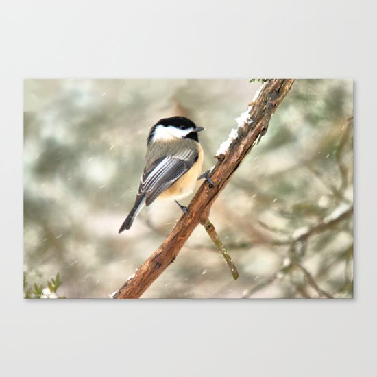 Clinging Chickadee Canvas Print
