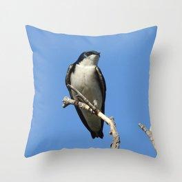Male Tree Swallow Throw Pillow