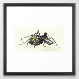 Anansi Framed Art Print