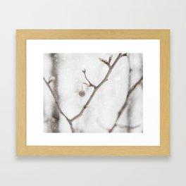 Crisp. Framed Art Print