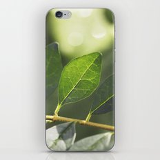 New Day iPhone & iPod Skin