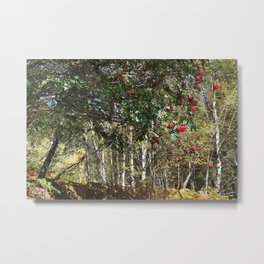 Wandering among the Rowan Metal Print