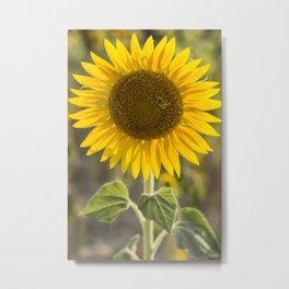 Tuscany Sunflower Metal Print