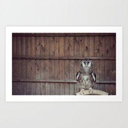 Ernie the Owl Art Print
