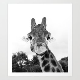 Giraffe. B+W. Art Print