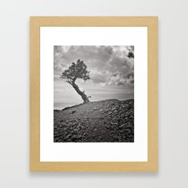 Lone Pine, Bryce Canyon Framed Art Print