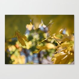 Secret Passage Canvas Print