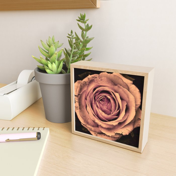 Vintage Rose,peach Framed Mini Art Print