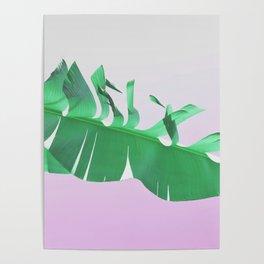Banana leaf on pink Poster