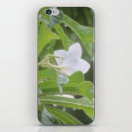 Frangipani iPhone Skin