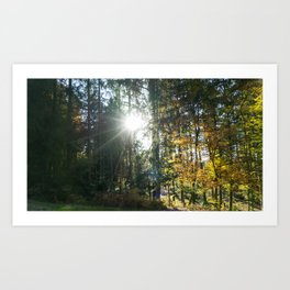Sundown in a French forest in fall Art Print