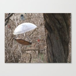 Not too Seedy Canvas Print
