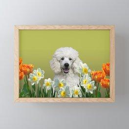 Poodle Dog sitting in field of white daffodils Framed Mini Art Print