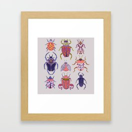 Assorted Beetles Framed Art Print
