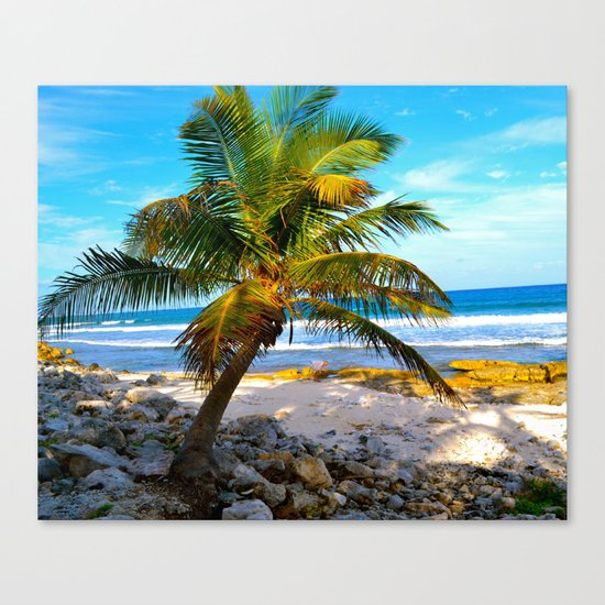 Mexican Palm Canvas Print