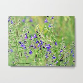 Tijuana Slough Wildflowers Metal Print