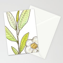 tea botanicals | Camelia // Tea (black, green, oolong) Stationery Cards