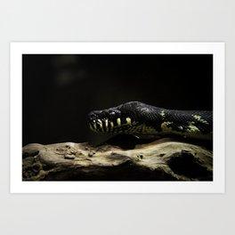 Snake. Art Print
