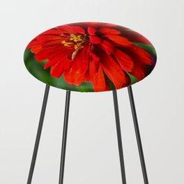 Red Zinnia Flower Counter Stool