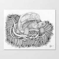 tortoise Canvas Prints featuring Tortoise by Squidoodle