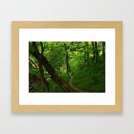 Woods II Framed Art Print