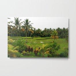 Bali - Rice Fields Metal Print